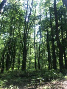 Lesní pozemek Brno Ivanovice